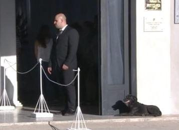 Emiliano Sala, la sua cagnolina Nala non smette di aspettarlo