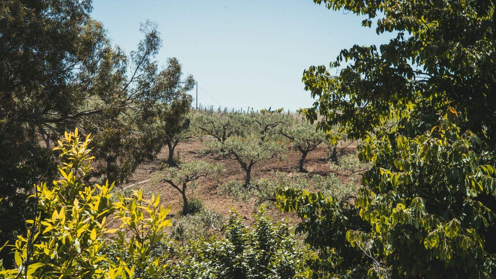 Sicilia, è boom di giovani laureati che investono sulla terra: la storia della Dragotto Farm
