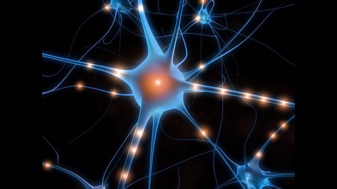 Scienza, fino a 90 anni c'è vita per i neuroni