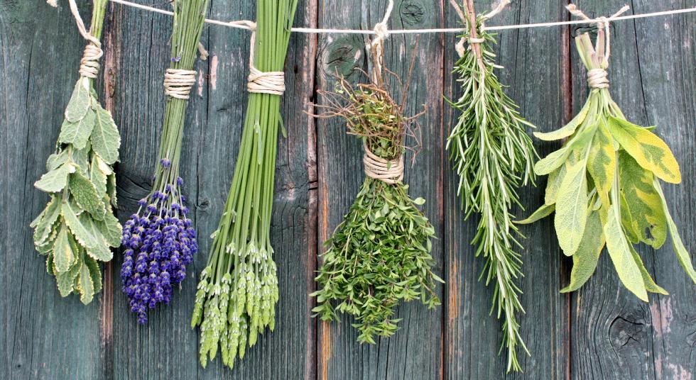 Depurarsi con le erbe aromatiche: la top five anti-grasso