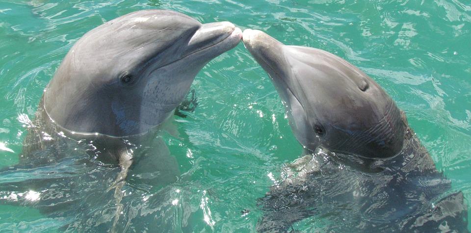 Le delfine hanno la clitoride e fanno sesso per piacere