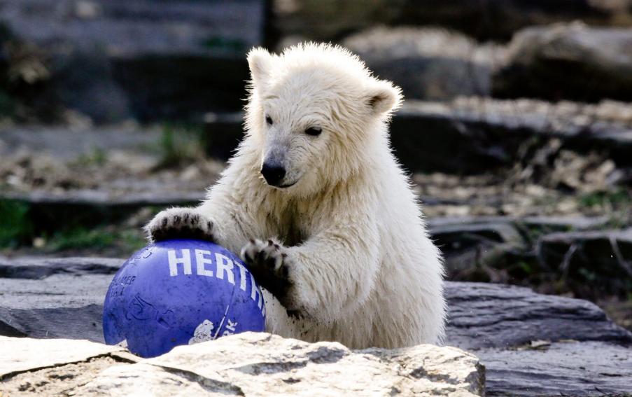Berlino, il cucciolo dello zoo è stato chiamato Herta