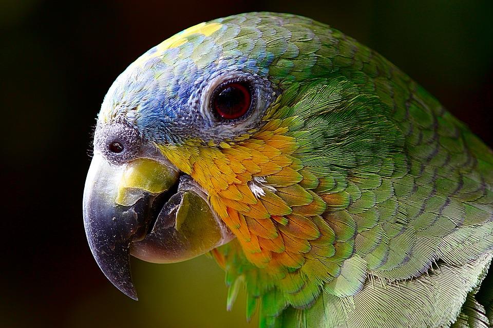 Uccise la vicina per le molestie del pappagallo, condannato a 22 anni