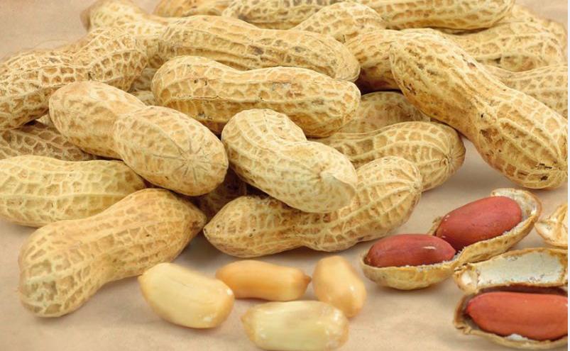 Il Dna delle arachidi contro i parassiti: migliore qualità dell'olio