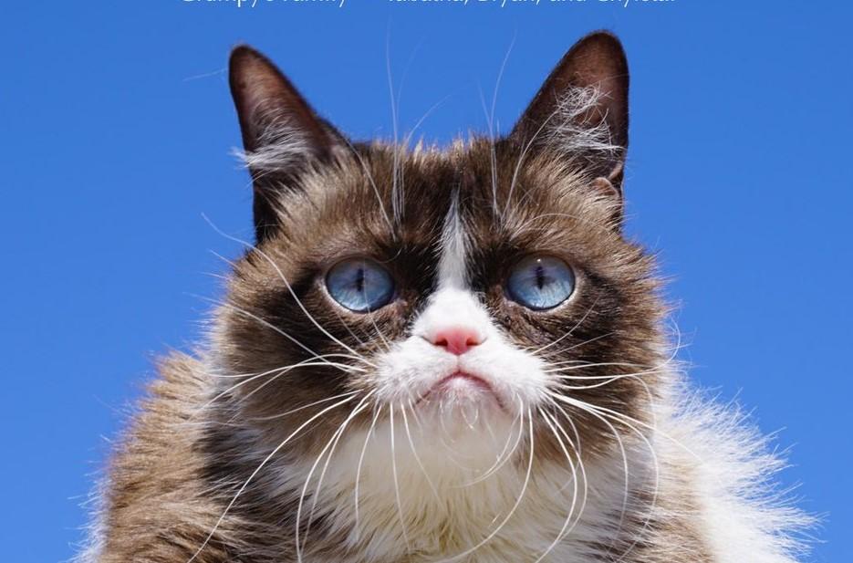 """Addio a Grumpy Cat, il """"gatto arrabbiato"""" del web lascia un patrimonio di 100 mila dollari"""