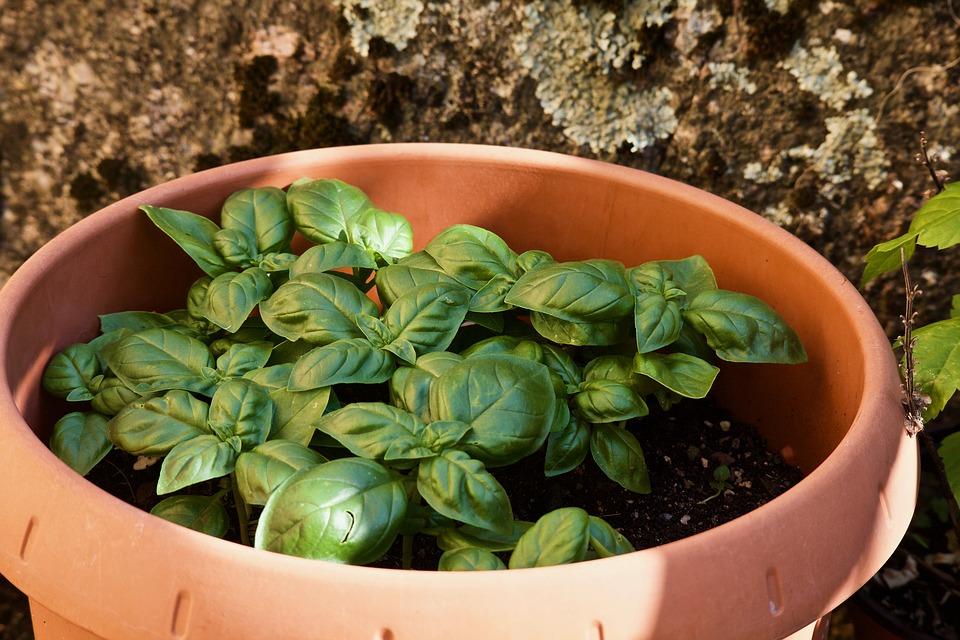 Piante aromatiche e ortaggi da coltivare in casa senza difficoltà