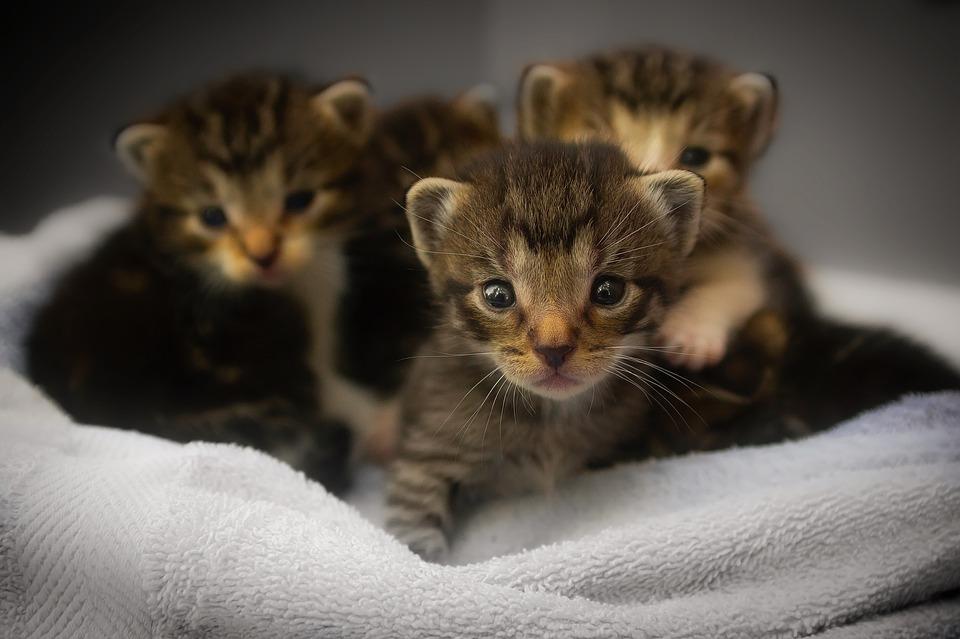 Giornata mondiale del gatto, perché si festeggia (anche) l'8 agosto
