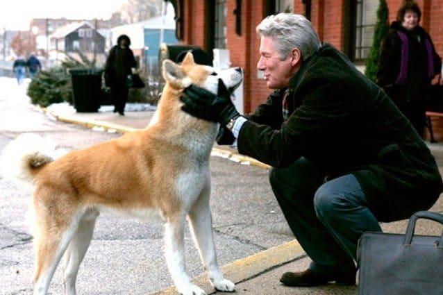 Un uomo muore e il suo cane lo aspetta sul luogo dell'incidente per un anno e mezzo