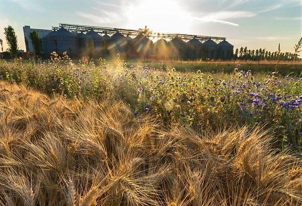 """Agricoltura sostenibile, nasce la """"Carta del mulino"""""""