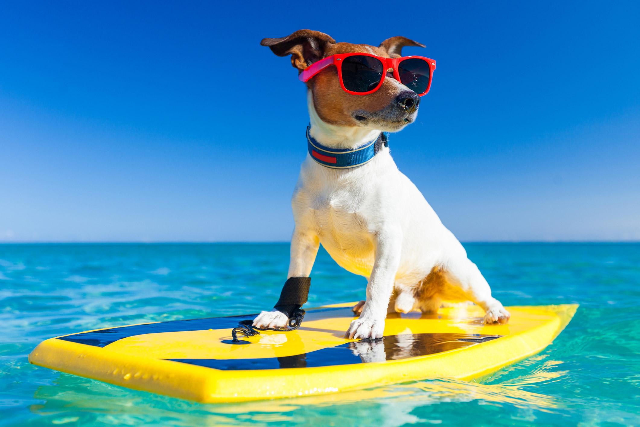Vacanze, 10 consigli utili per gestire un cane capriccioso durante le ferie