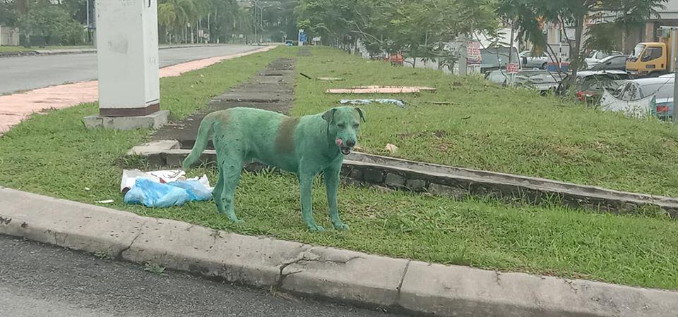 """Cane ricoperto di vernice verde in Malesia, la polemica social """"È disumano"""""""
