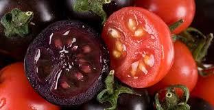 Rivelata origine del colore del pomodoro, era viola