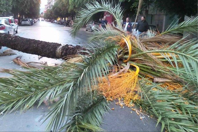 Maltempo a Palermo, tempesta di vento nella notte: alberi caduti e black out