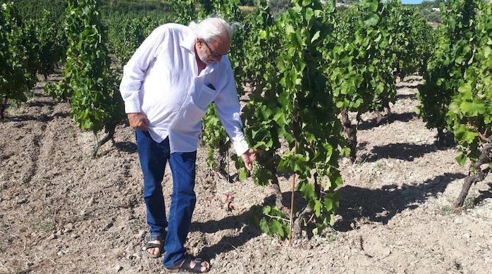 Grande premio internazionale dei vini biologici 2020, brilla la Cantina Palmeri