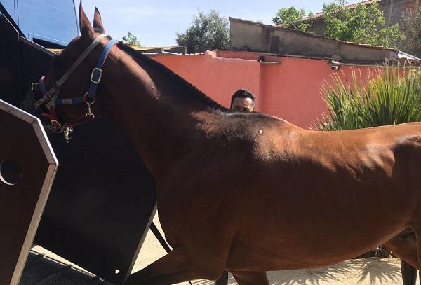 Gare clandestine di cavalli ad Enna: 8 arresti e 13 denunce