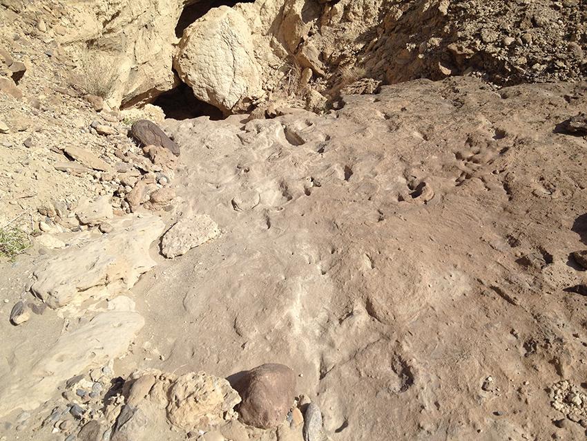 Eritrea - Trovate in Dancalia le orme dell'homo erectus