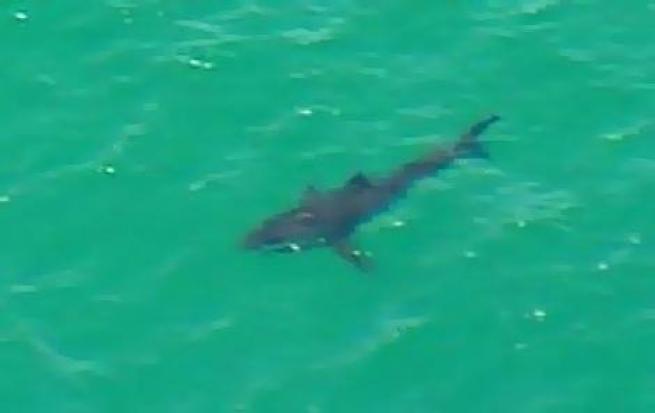 Elicottero Squalo : Sidney surfista ucciso da uno squalo foto l attacco